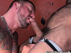 Mature bear barebacked in interracial threesome
